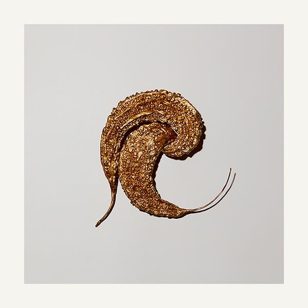 contemporary art limited edition photography subject gold karela by paul krokos london