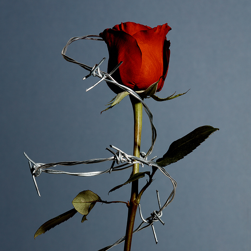contemporary floral red rose photography paul krokos new york